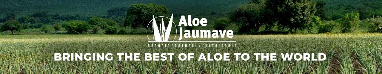 Aloe Jaumave