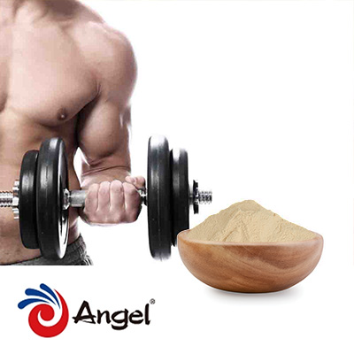 Yeast Protein 70% by Angel Yeast