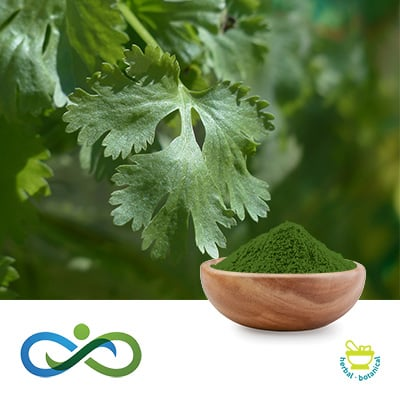 Conventional Coriander Powder by Shandong Premium Select Foods