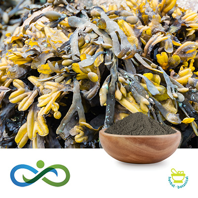 Conventional Kelp Powder by Shandong Premium Select Foods