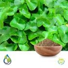 Centella Asiatica Extract 10:1 20% Saponin by Gravimetry by S.A.HerbalBioactives