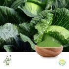 Conventional Cabbage Powder by Qimei Industrial Group