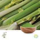 Conventional Celery Powder by Qimei Industrial Group