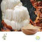 Conventional Lion's Mane Powder by Qimei Industrial Group
