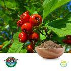 Hawthorn Berry Powder by Ningbo Herb