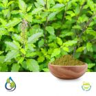 Holy Basil extract 2.5% Total Ursolic Acid (USP) by HPLC by S.A.HerbalBioactives