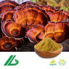 Organic Reishi Mushroom Extract 30% Polysaccharide