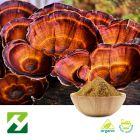 Organic Reishi Mushroom Extract 40% Polysaccharides UV