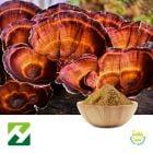 Reshi Mushroom Extract 40% Polysaccharides UV