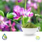 Alfalfa Powder ( Steam Treated ) by S.A. Herbal Bioactives Llp