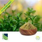 Bacopa Monnieri Extract 50% USP by Botanic Healthcare