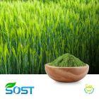 Barley Grass Powder by SOST