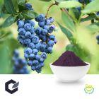 European Bilberry Extract Powder 25% by BGG