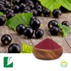 Black Currant Fruit Powder