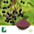 Black Elderberry Extract 10:1