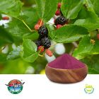 Black Mulberry 1-2% Anthocyanins by Ningbo Traditional Chinese Pharmaceutical Corp.