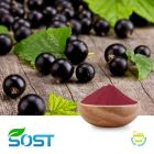 Blackcurrant Powder by SOST