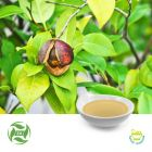 Camellia Seed Oil (25kg Drum) by Ji'An Zhongxiang Natural Plant Co., Ltd