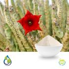 Caralluma fimbriata Powder ( Steam Treated ) by S.A. Herbal Bioactives