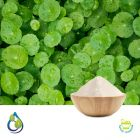 Centella asiatica Powder by S.A. Herbal Bioactives