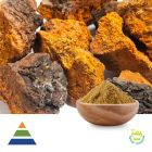 Chaga Mushroom (Inonotus obliquus) Extract Polysaccharides 30% by Shaanxi Kingsci Biotechnology Co.,Ltd