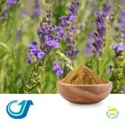 Chinese Skullcap 5:1 Full-Spectrum Extract by Tianjiang Pharmaceutical Co., LTD.