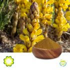 Cistanche Tubulosa Extract 15% Total Glycosides