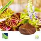 Coleus Forskohlii Extract 10% Forskolin by Botanic Healthcare