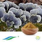Coriolus Mushroom Extract by Hunan NutraMax
