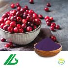 Cranberry Extract 25% Anthocyandins