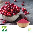 Cranberry Extract 4:1