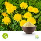 Dandelion Root Extract 10:1 by Hunan Essence