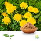 Dandelion Root Powder by American Botanicals