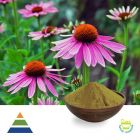 Chicoric Acid 4% HPLC (Echinacea Purpurea Extract)