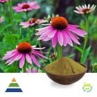 Echinacea Purpurea Ext 2% CHA and CAA HPLC by Shaanxi Kingsci Biotechnology Co.,Ltd