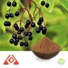 Elderberry Extract 10:1 TLC
