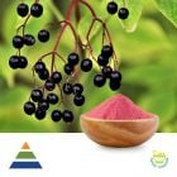 Elderberry Extract 10:1 by KS Nutripharma