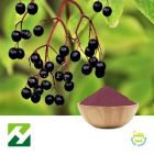 Elderberry Extract 4:1