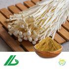 Enoki Mushroom Extract 10% Polysaccharide