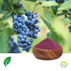 European Bilberry Extract 10:1