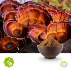 Ganoderma Extract10:1 by Hunan Essence