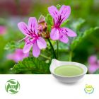 Geranium Oil (25kg Drum) by Ji'AnZhongxiangNaturalPlantCo., Ltd