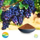 Grape seed extract 95 ( EUR) by CCGB