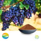 Grape seed extract 95 ( EUR) by Chenguang Biotech Group Co., Ltd
