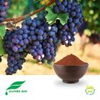 Grape Seed Extract 95% Proanthocyanidins UV