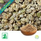 Green Coffee Bean P.E. 50% Chlorogenic Acid