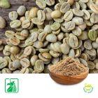 Green Coffee Bean P.E. 50% Chlorogenic Acid