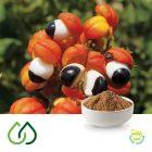 Guarana Dry Extract 22%