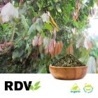 Organic Guayusa Leaves by RDV Products