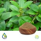 Gymnema Sylvestre P.E. 25% Gymnemic Acid